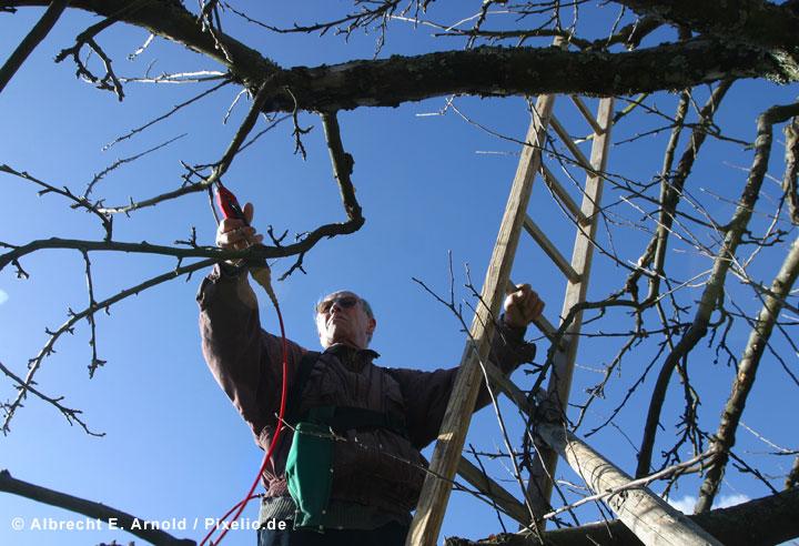 Obstbaumschnittkurse